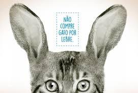 Não compre gato por lebre
